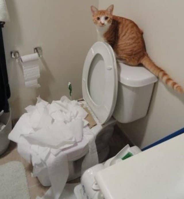 рыжий кот сидит на бачке унитаза