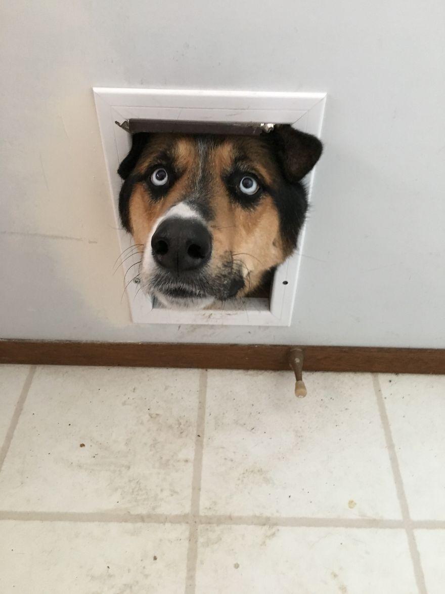 голова собаки в проеме двери