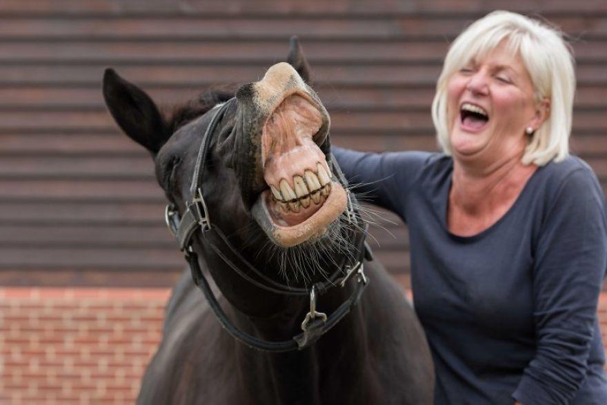 женщина и лошадь смеются