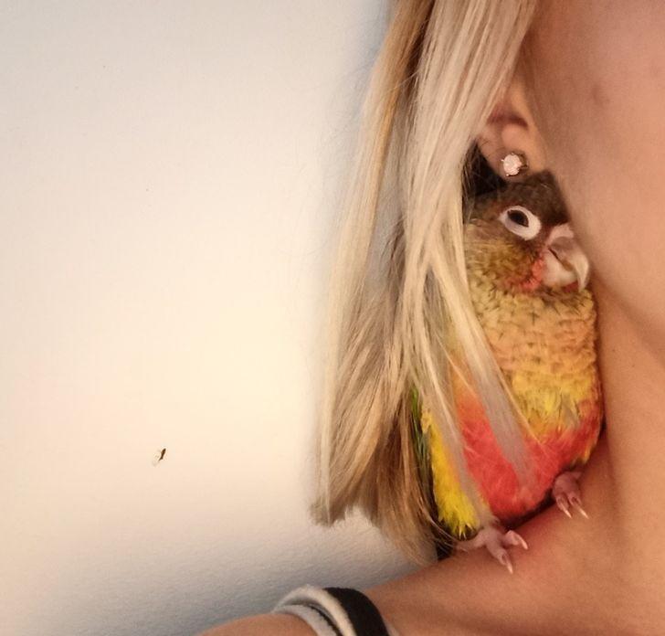 попугай сидит на плече у блондинки