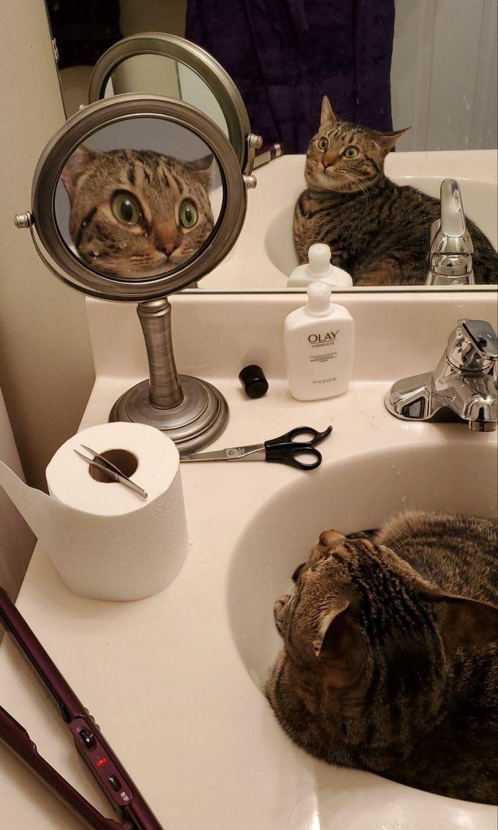 полосатый кот лежит в раковине