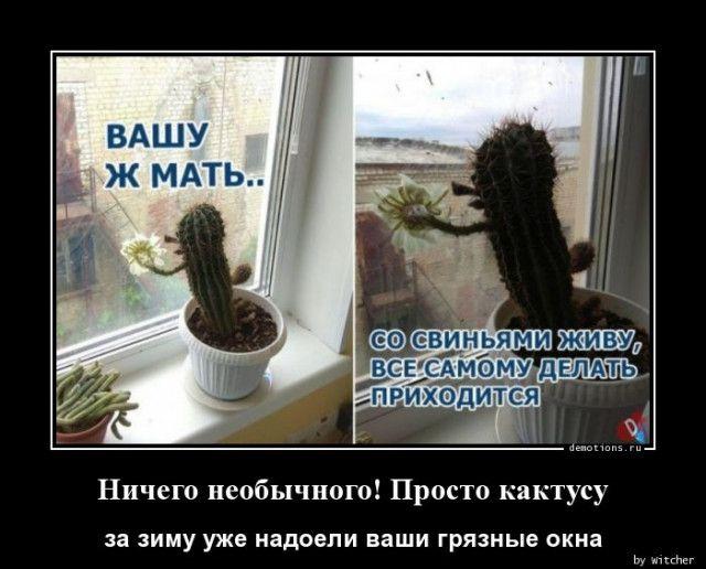 1590994774_demy-11.jpg