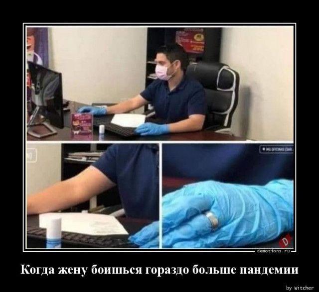 1591339558_demki-14.jpg