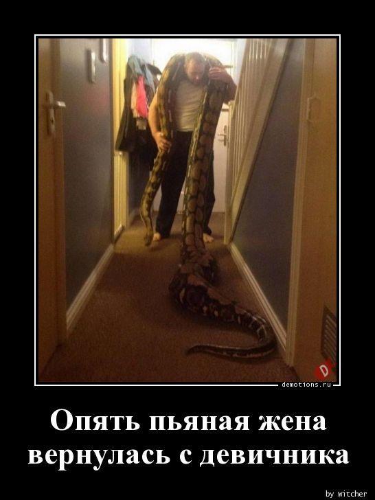 1591339582_demki-20.jpg