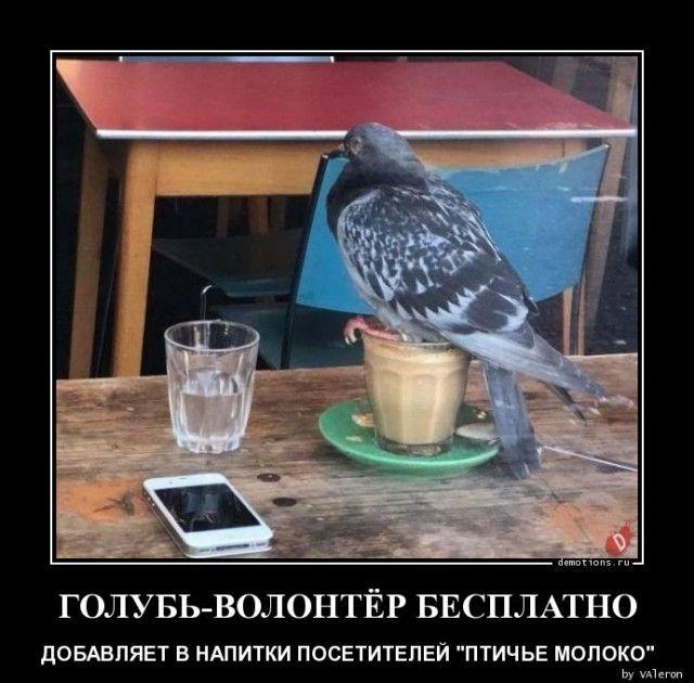 1591339561_demki-17.jpg