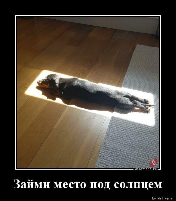1591339566_demki-13.jpg
