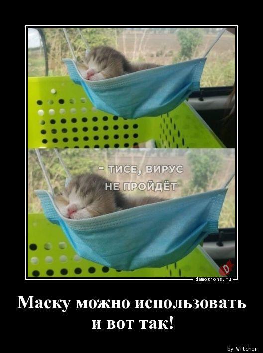 1591339575_demki-16.jpg