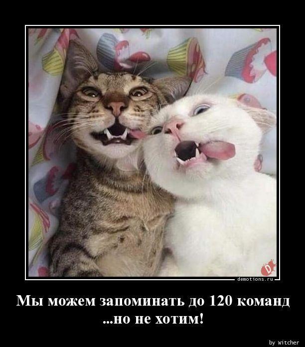 1591771691_demy-7.jpg