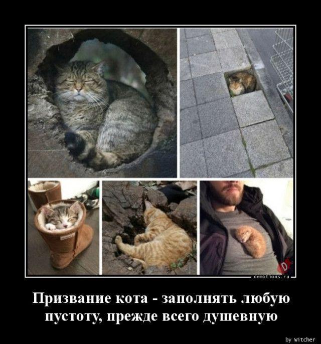 1591771675_demy-5.jpg
