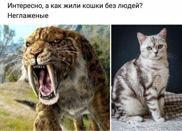1592130921_prikol-15.jpg