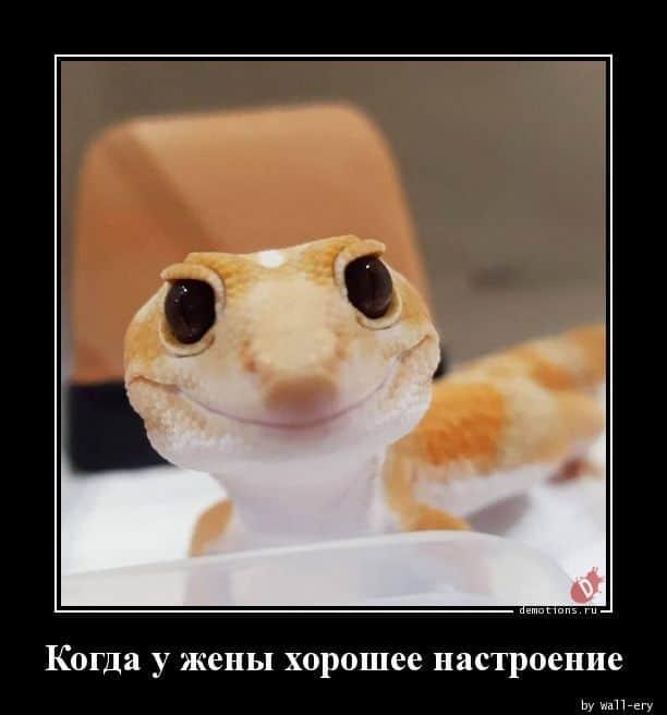 1593070103_demotivatory-13.jpg