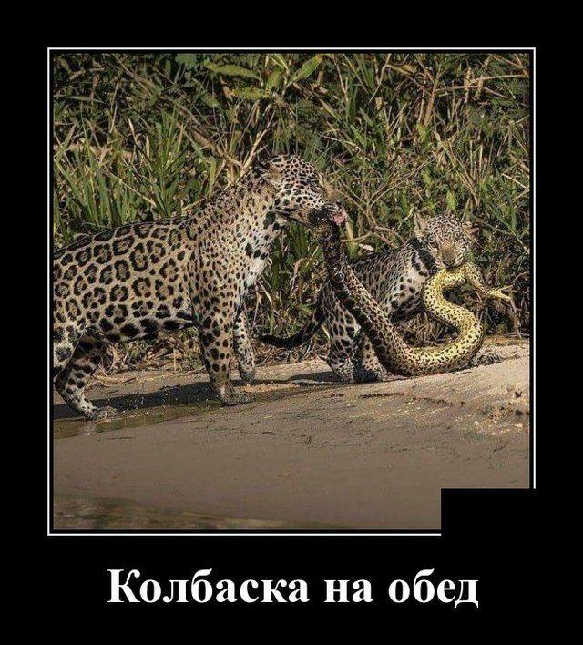 1593175372_demotivatory_10.jpg