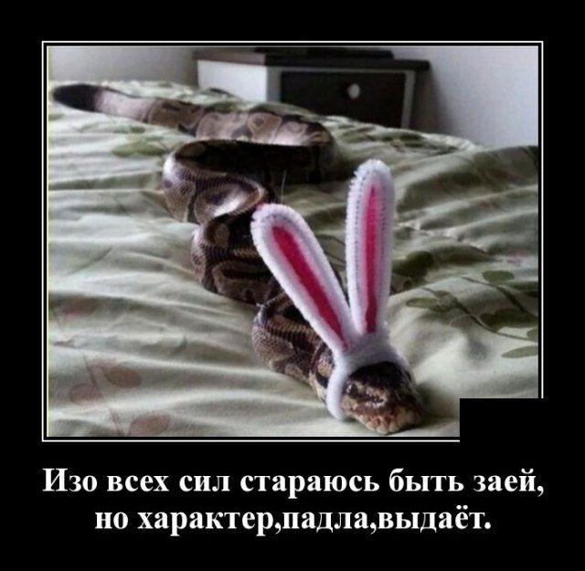 1593175429_demotivatory_09.jpg