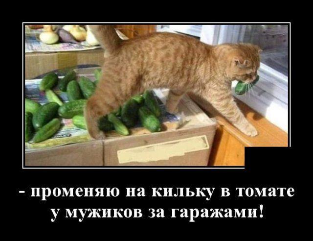 1593175431_demotivatory_13.jpg