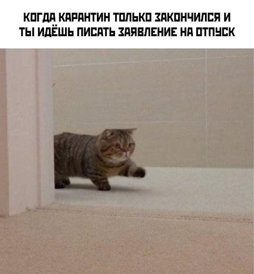 1593062131_5.jpg