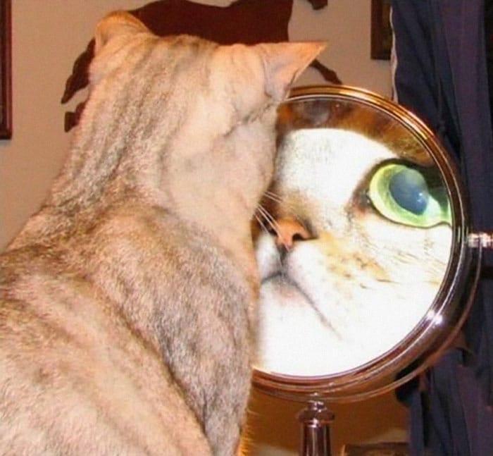 увеличенное отражение кота в зеркале