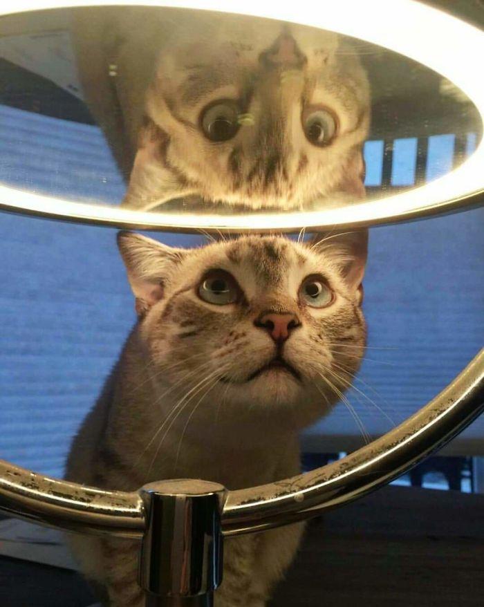 кот смотрит на зеркало