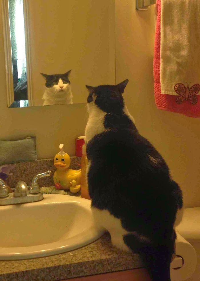 кот сидит возле зеркала