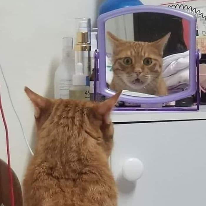 рыжий кот удивленно смотрит в зеркало