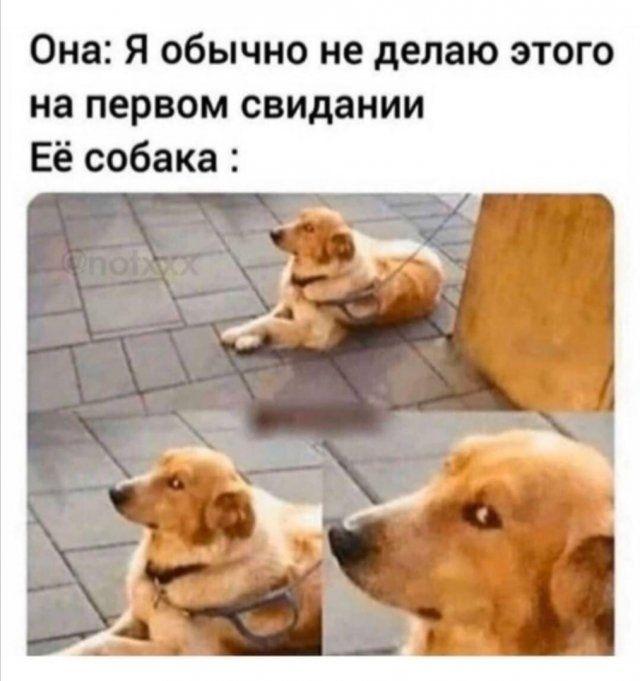 devushek-sovremennyh-memy-citaty-vkontakte-vkontakte-smeshnye-statusy