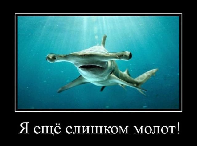 1593758886_demotivatory-8.jpg