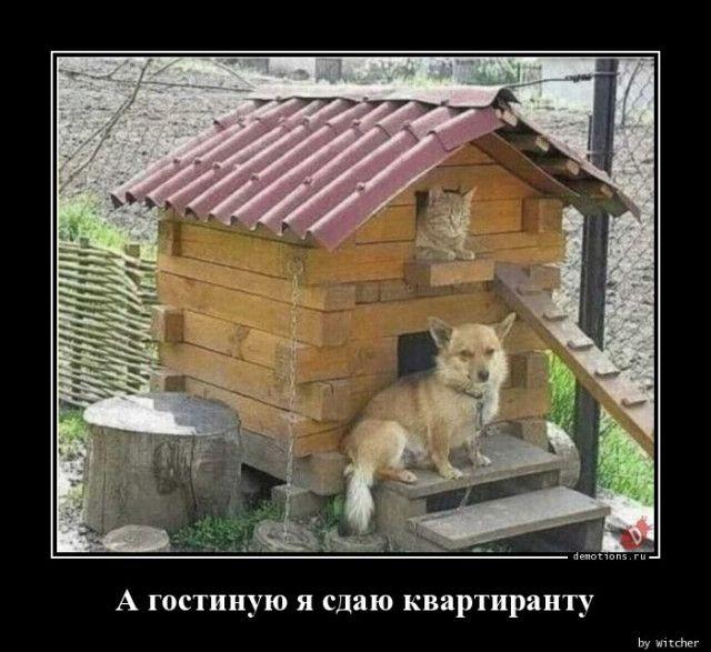 1593758942_demotivatory-9.jpg