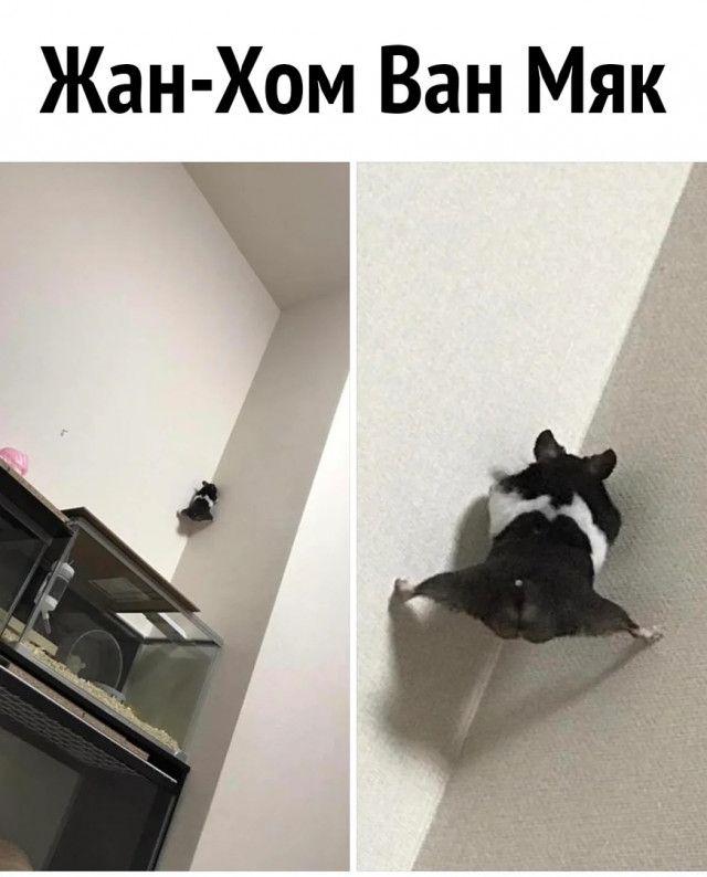 1594441916_prikol-10.jpg