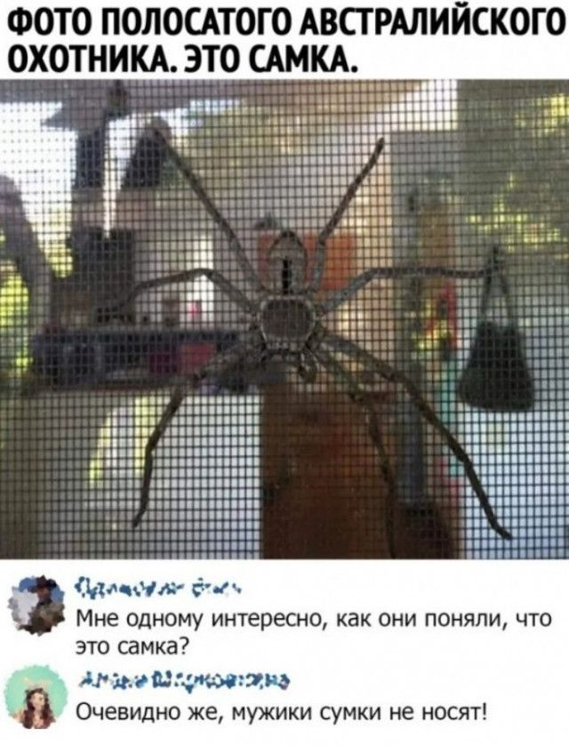 1594800271_smeshno-24.jpg