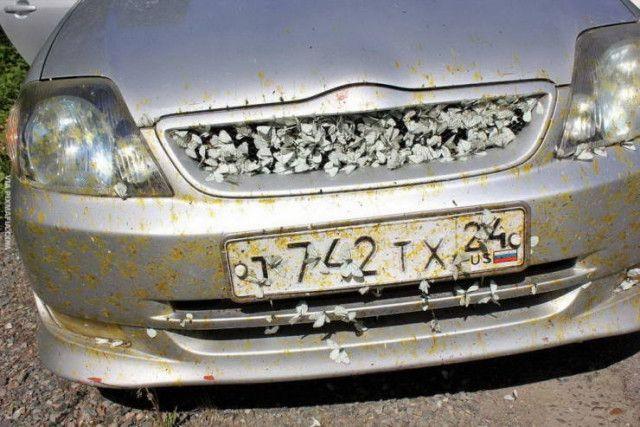 1594917306_avto-3.jpg