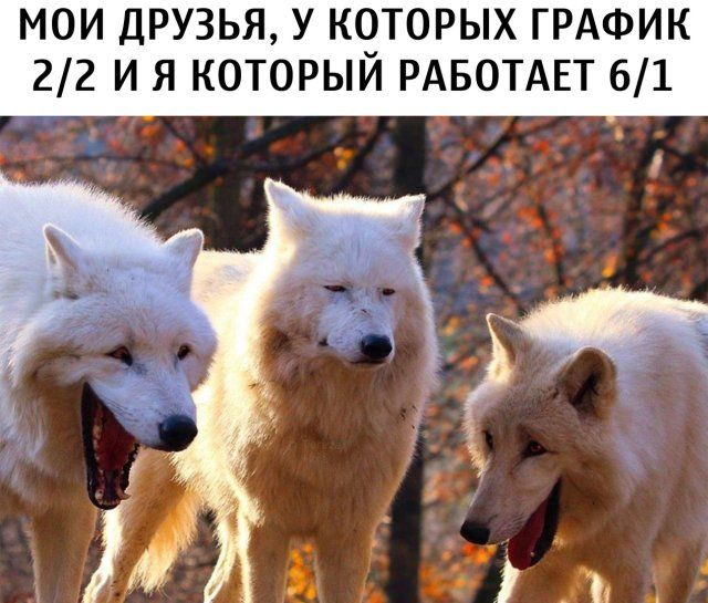 199966_4012.jpg
