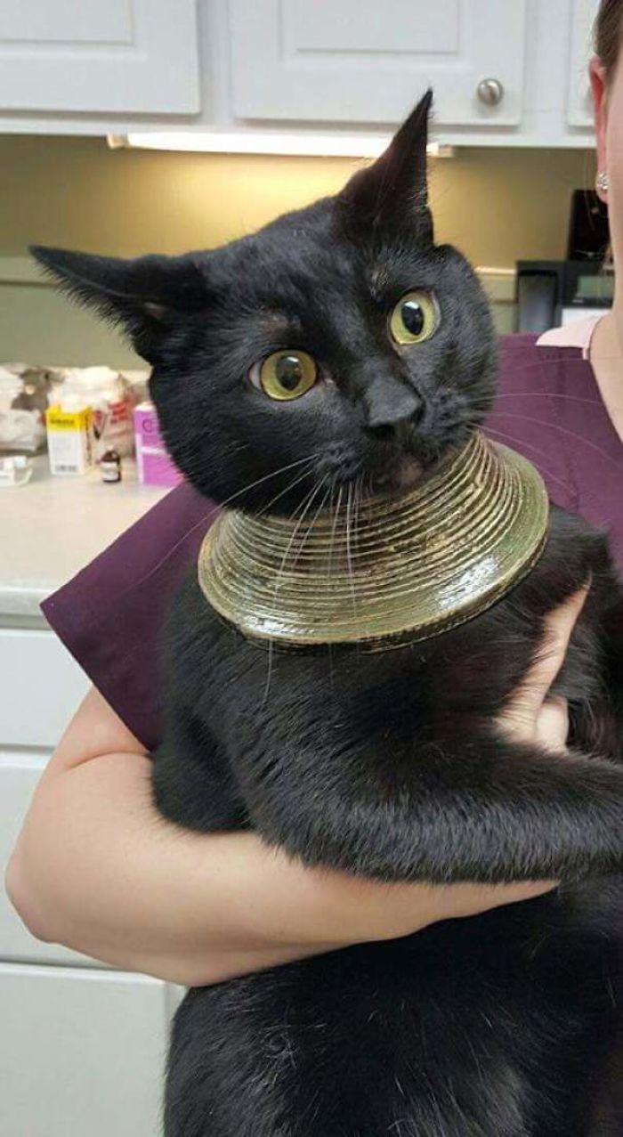 черный кот на руках у ветеринара