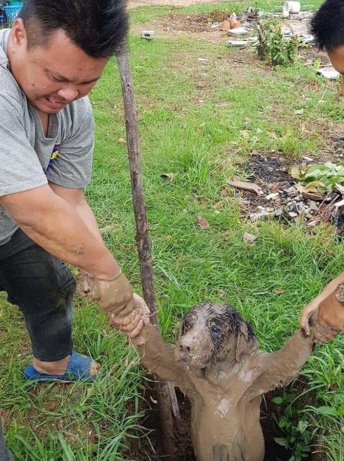 мужчины тянут собаку из грязи