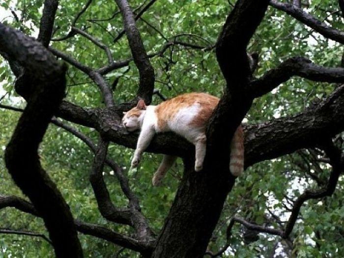 бело-рыжий кот спит на дереве