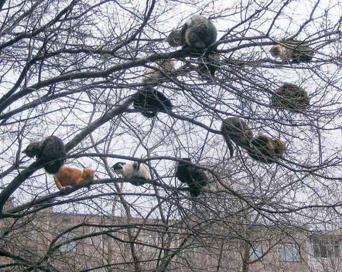 коты сидят на ветках
