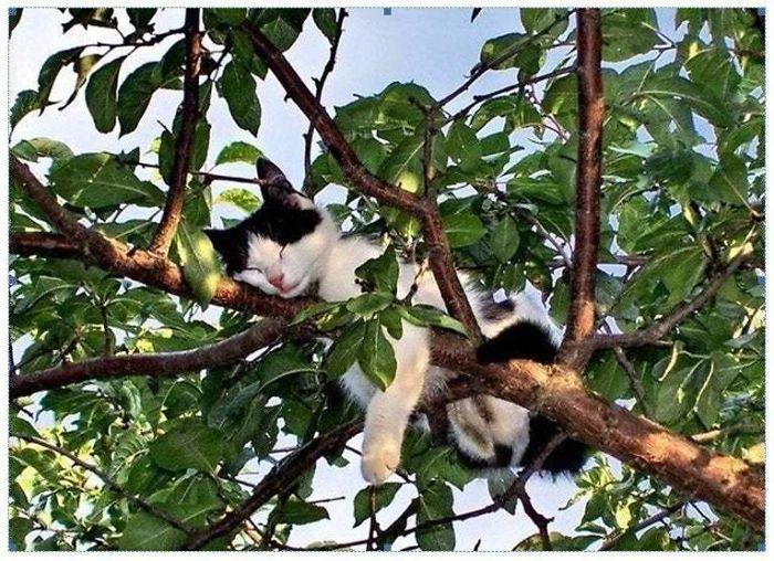 черно-белая кошка спит на дереве