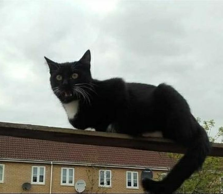 черный кот на фоне дома