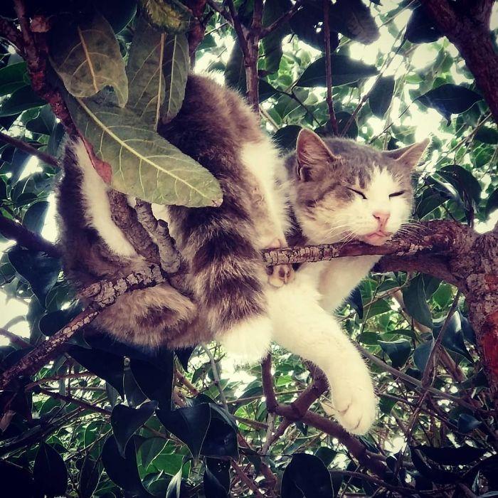 кот спит на ветках