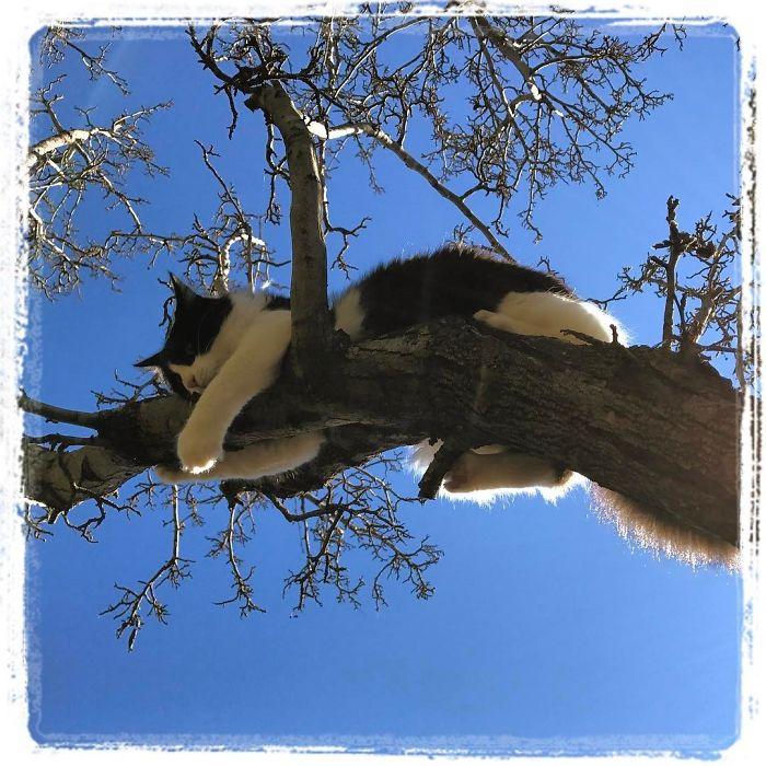 черно-белый кот спит на дереве