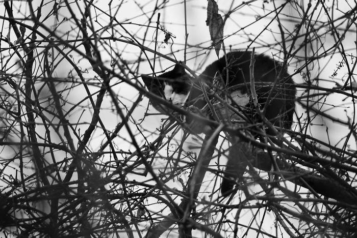 черно-белый кот сидит на ветках