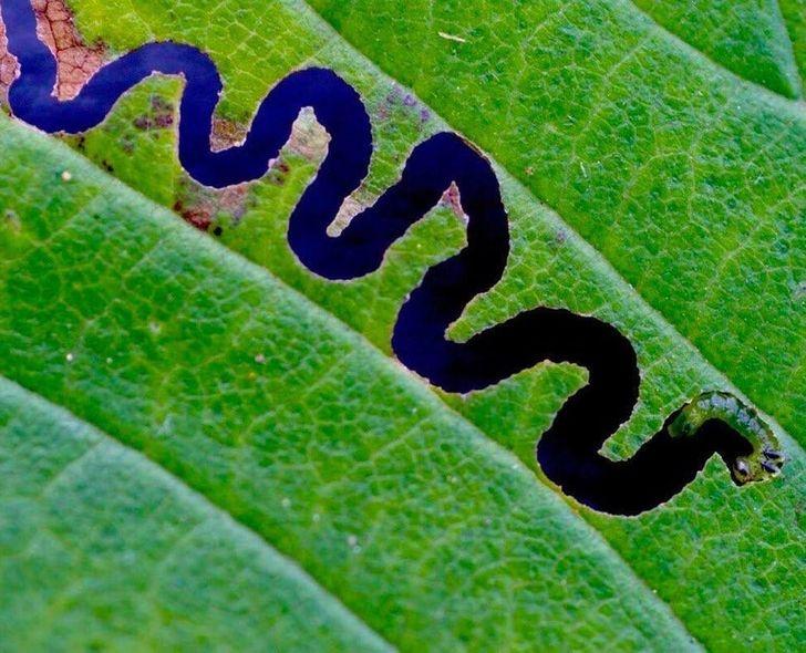 лист, съеденный гусеницей