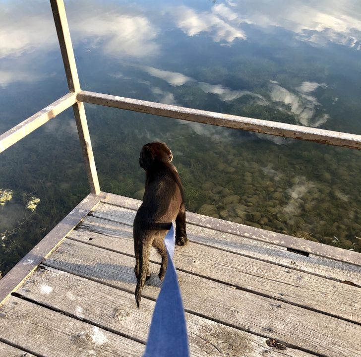 собака на помосте у пруда