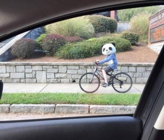человек на велосипеде с головой панды