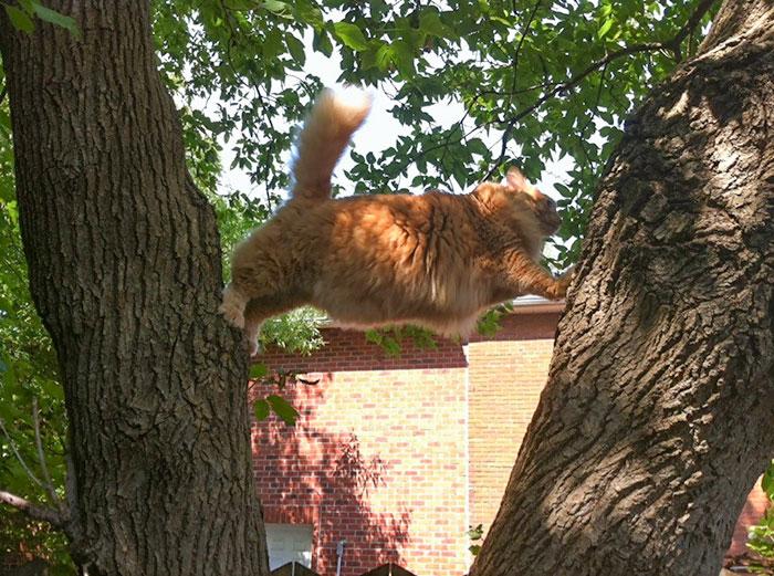 рыжий кот застрял на дереве