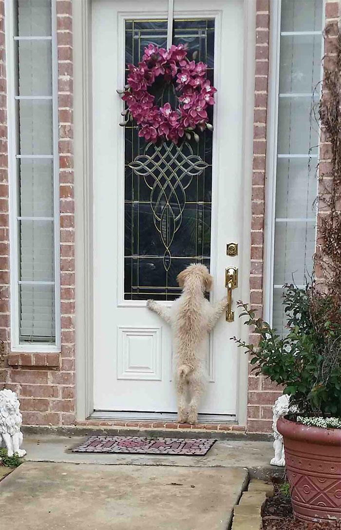 собака стоит на задних лапах возле дверей