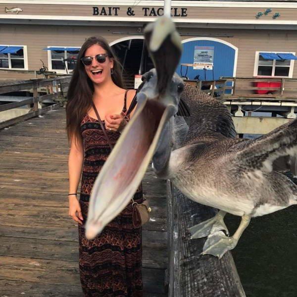 пеликан в кадре с девушкой