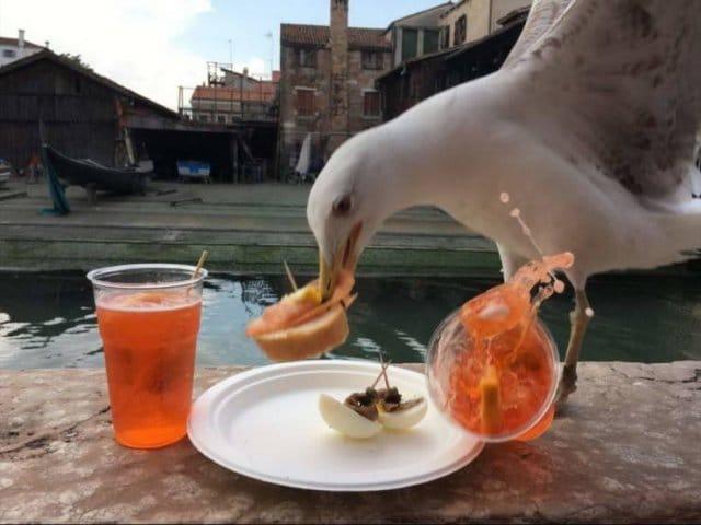 чайка ворует с тарелки еду