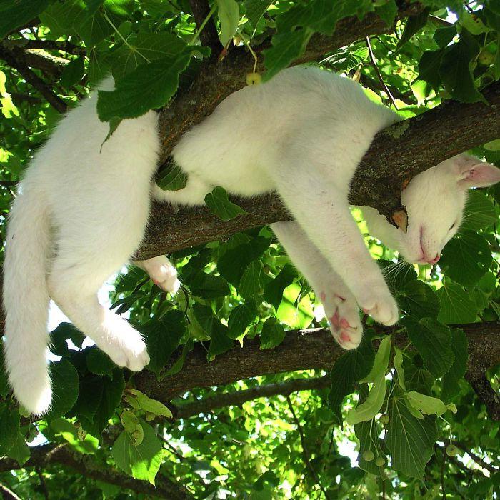 белый кот спит на дереве