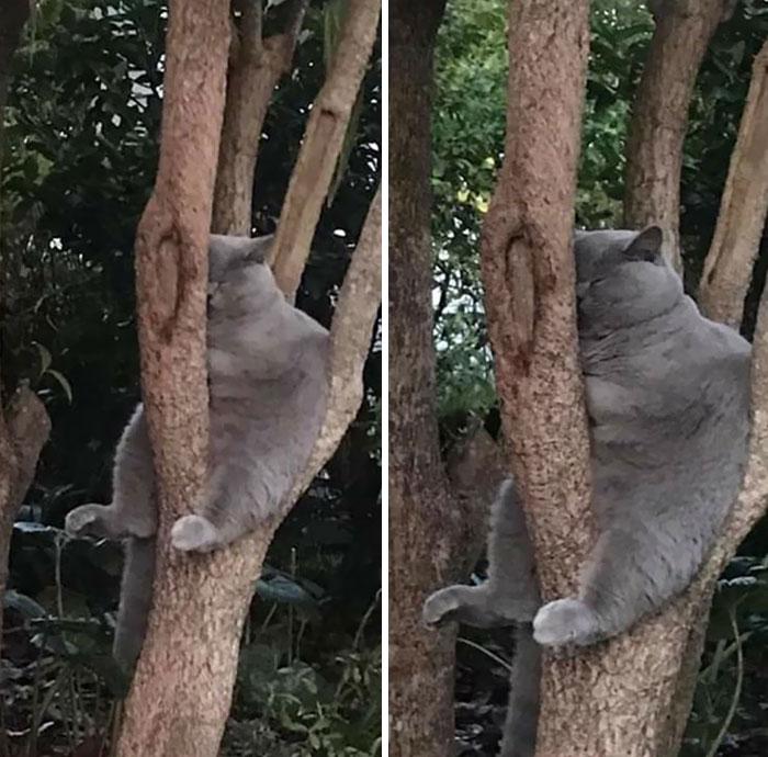 серый кот спит сидя на дереве