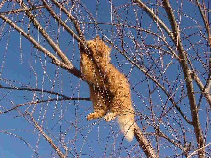 рыжий кот спит на ветках