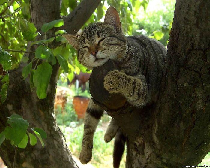 полосатый кот спит на дереве